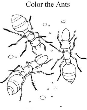 ants-coloring-page