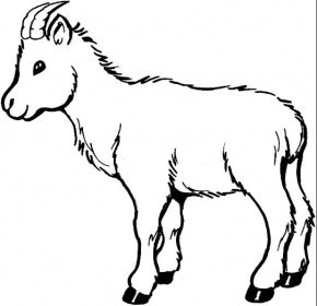 baby-goat-coloring-page