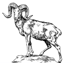 big-horned-sheep-coloring-page