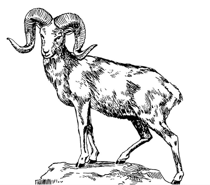 coloring page of a sheep - horns free colouring pages