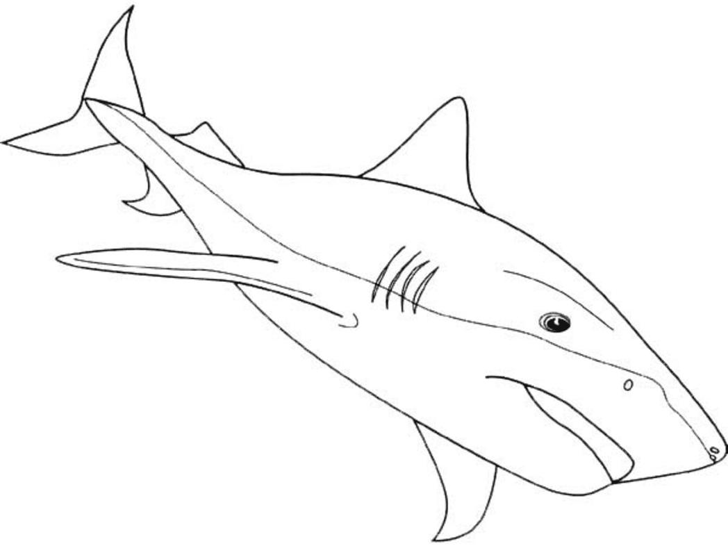 Shark & Coloring Book