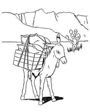 burro-coloring-page