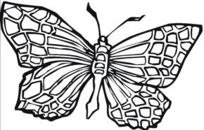 Butterfly Adult Coloring Page