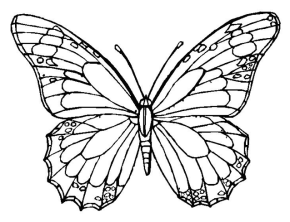 Free coloring pages and coloring book - Page 27 : Monarch Butterfly ...