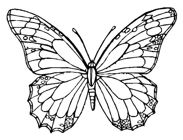 butterfly coloring page - Printable Butterfly Coloring Pages