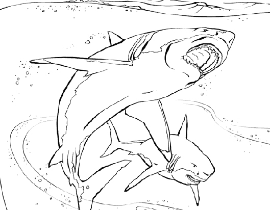 coloring pages shark