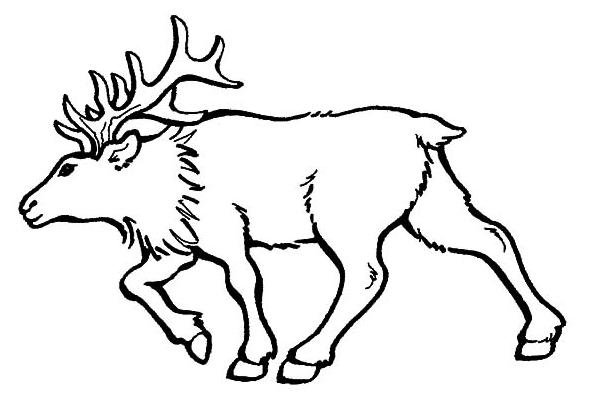 Elk Coloring Page & Coloring Book