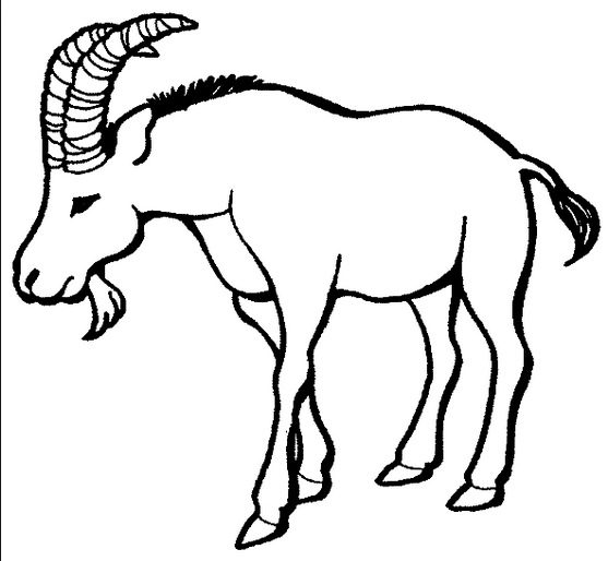 goat with horns coloring page - Coloring Page Goat