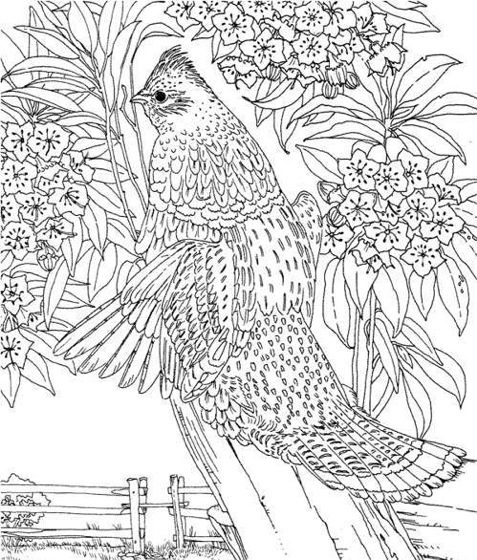 Hard Coloring Page & Coloring Book