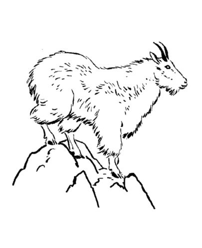 Mountain goat coloring book for Coloring pages mountains