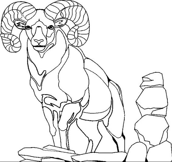 Mountain Goat Ram Coloring Page
