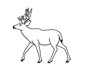 cartoon deer coloring pages - photo#36