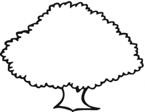 oak tree pine tree coloring page - Apple Tree Coloring Page