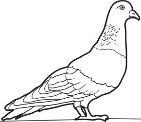 Pigeon Coloring Page Monkeyoutline3 Animals