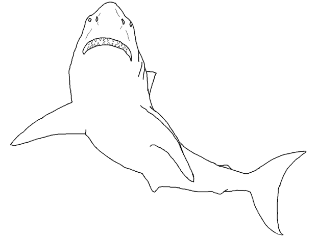 shark2-coloring-page
