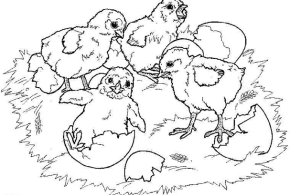 spring-chicks-coloring-page