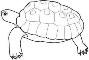 turtle-coloring-page