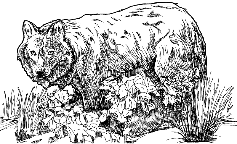 wolf coloring page - Hard Animal Coloring Pages