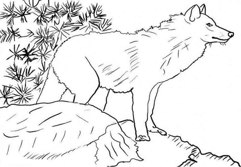 wolf in woods coloring page - Wolf Coloring Pages