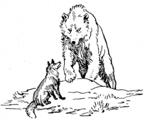wolf-vs-bear-coloring-page
