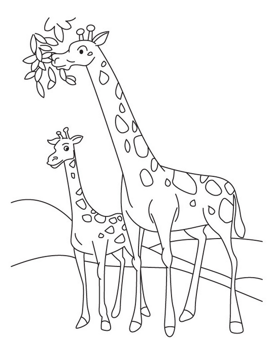 Baby Giraffe Coloring Page Coloring Page Book For Kids