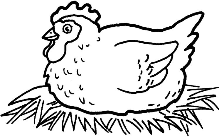 Chicken Coloring Page coloring page & book for kids.