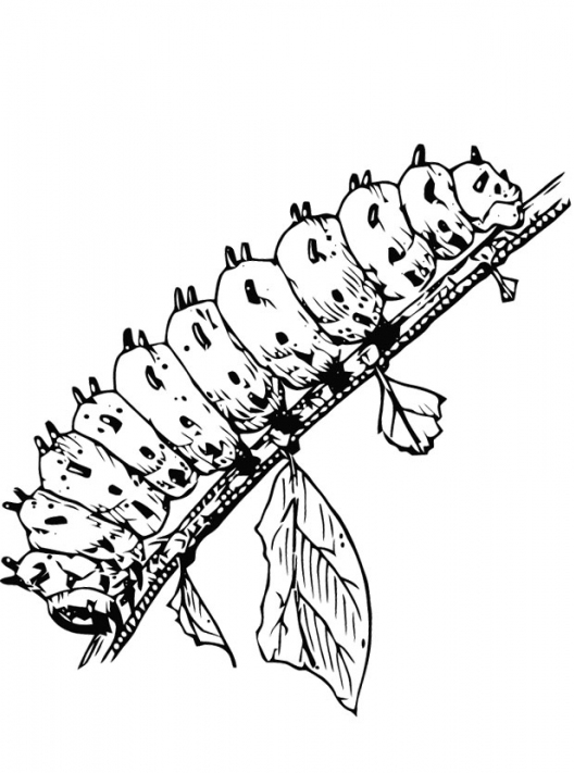 Caterpillar Coloring Page Book