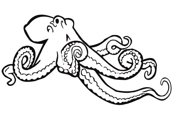 Giant Octopus Coloring Page & Coloring Book