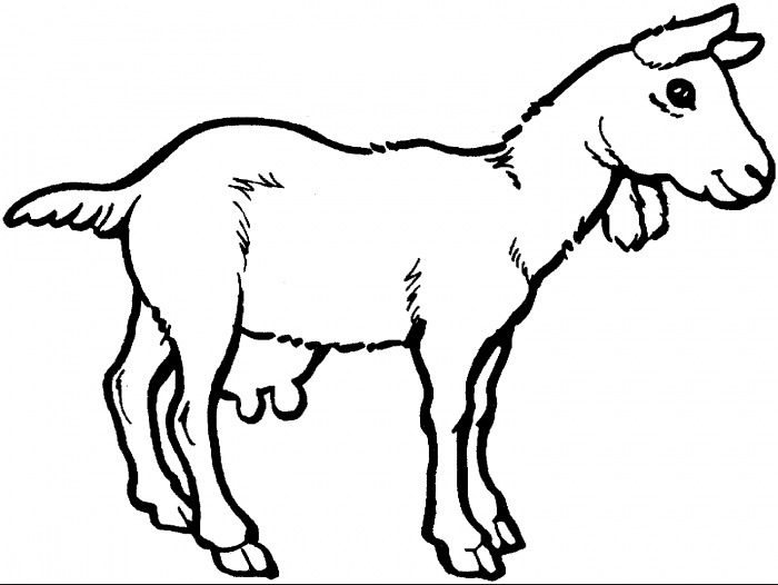 Goat Coloring Page coloring page   book for kids. adf66f180