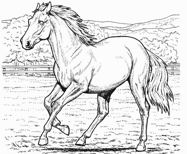 Horse Coloring Page coloring page & book for kids.