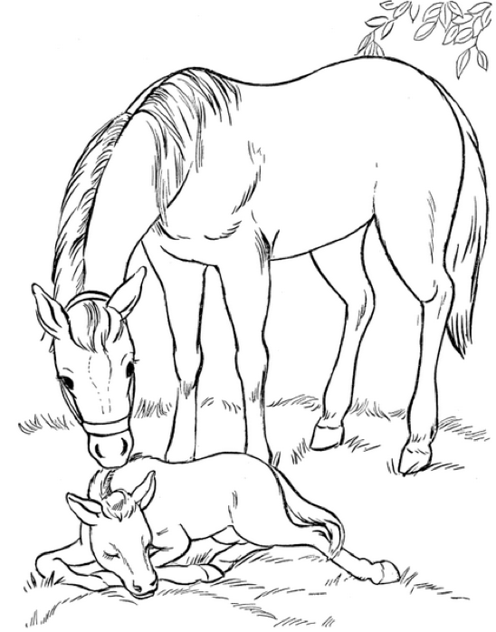 Mare and Foal Coloring Page coloring page & book for kids.