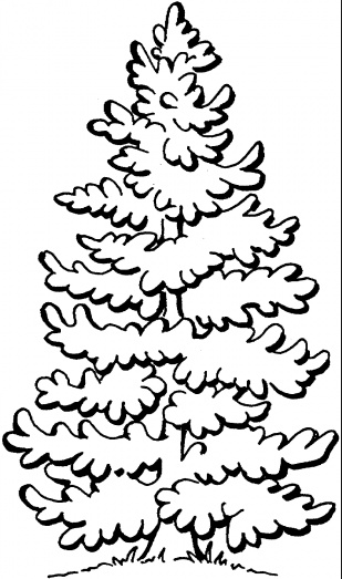 Pine Tree & Coloring Book