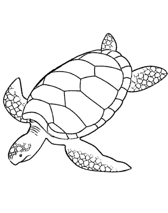 - Sea Turtle Coloring Page Coloring Page & Book For Kids.